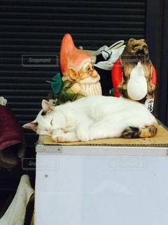 猫の写真・画像素材[537756]