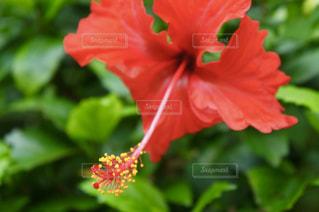 花の写真・画像素材[544308]