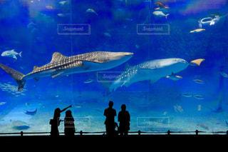 魚の写真・画像素材[567449]