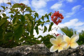 花の写真・画像素材[567921]