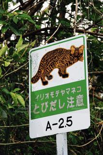 猫の写真・画像素材[568385]