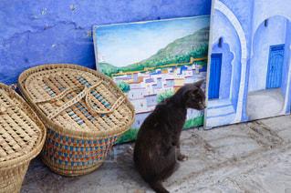 猫の写真・画像素材[570874]