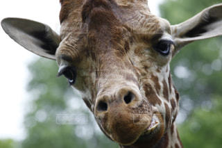 動物の写真・画像素材[498386]
