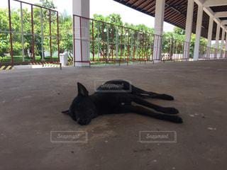 犬の写真・画像素材[500034]