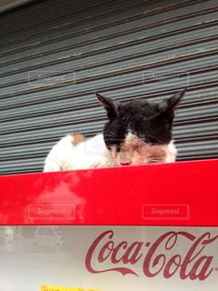 猫の写真・画像素材[501194]