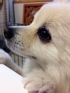 No.501945 犬