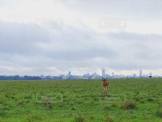 アフリカ、ケニア、ナイロビの写真・画像素材[889819]