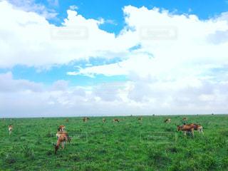 アフリカ、ケニア、ナイロビの写真・画像素材[889823]
