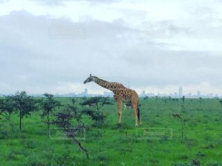 アフリカ、ケニア、ナイロビの写真・画像素材[889826]