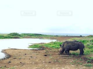 アフリカ、ケニア、ナイロビの写真・画像素材[889828]