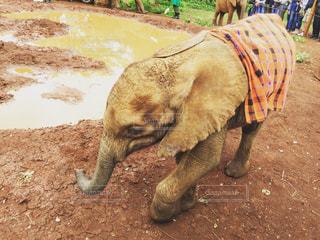 アフリカ、ケニア、ナイロビの写真・画像素材[894744]