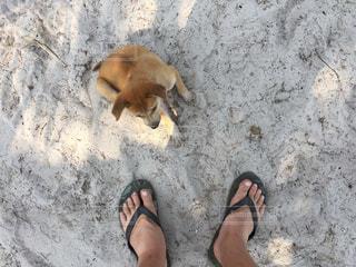 カンボジア、ロン島の写真・画像素材[1220454]