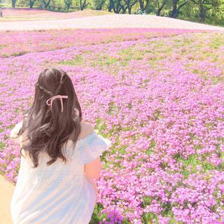お花畑の写真・画像素材[547976]