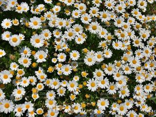 花の写真・画像素材[504302]
