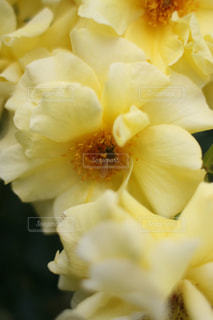 花の写真・画像素材[508374]