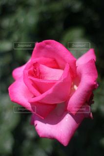 花の写真・画像素材[508380]