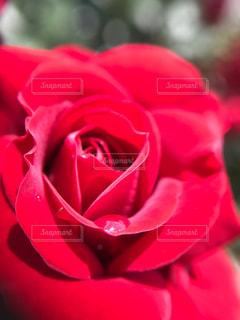 花の写真・画像素材[508416]