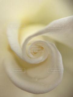 花の写真・画像素材[508424]