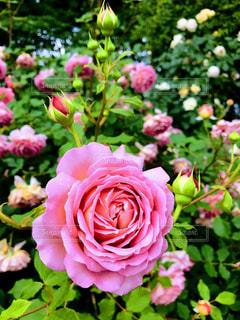 花の写真・画像素材[551078]