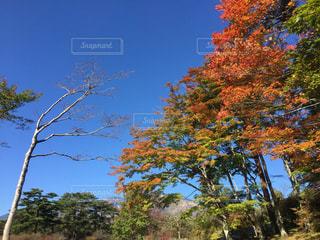 空の写真・画像素材[551119]