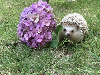 花の写真・画像素材[583232]