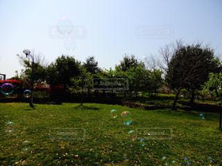 公園の写真・画像素材[498941]
