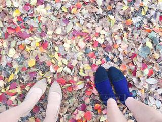 秋の写真・画像素材[498978]