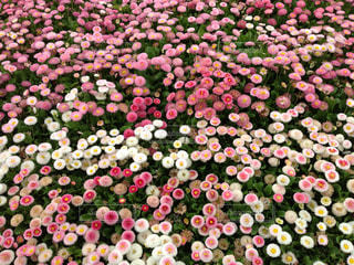 花の写真・画像素材[499013]