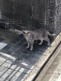歩道を歩いている猫の写真・画像素材[2731489]