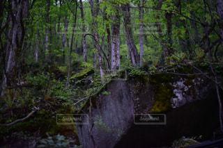 自然の写真・画像素材[499102]