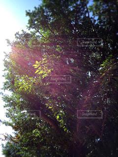 木の写真・画像素材[502465]