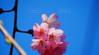 花の写真・画像素材[503745]