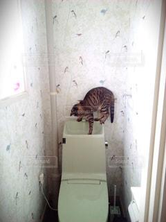 猫の写真・画像素材[504026]