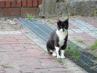 猫の写真・画像素材[509949]