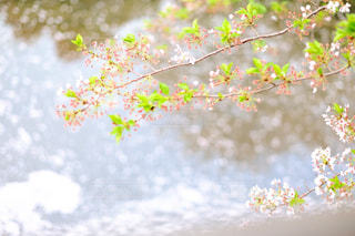 春 - No.500388