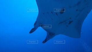 海の写真・画像素材[501341]