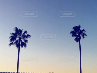 海の写真・画像素材[501688]