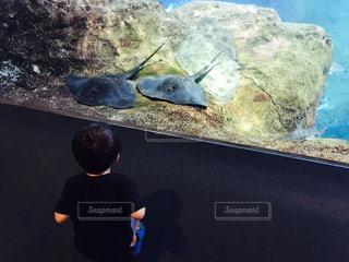 水族館で座る息子とエイ二匹の写真・画像素材[770963]