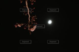 春の写真・画像素材[501784]