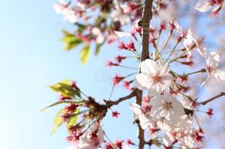 春の写真・画像素材[501786]