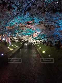 No.505025 桜