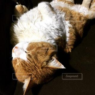 猫の写真・画像素材[502973]
