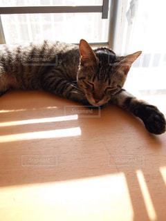 猫の写真・画像素材[504388]