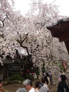春の写真・画像素材[504414]