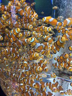魚の写真・画像素材[511667]