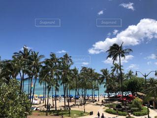 ヤシの木がある浜辺の写真・画像素材[2103739]