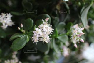 花のクローズアップの写真・画像素材[2127758]