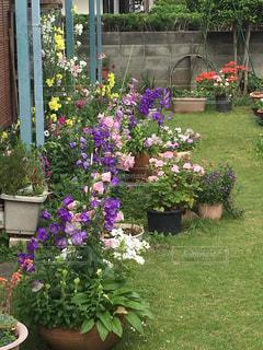 花の写真・画像素材[507947]