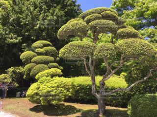 箱根の写真・画像素材[518371]