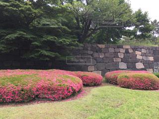 皇居東御苑二の丸庭園の写真・画像素材[518478]